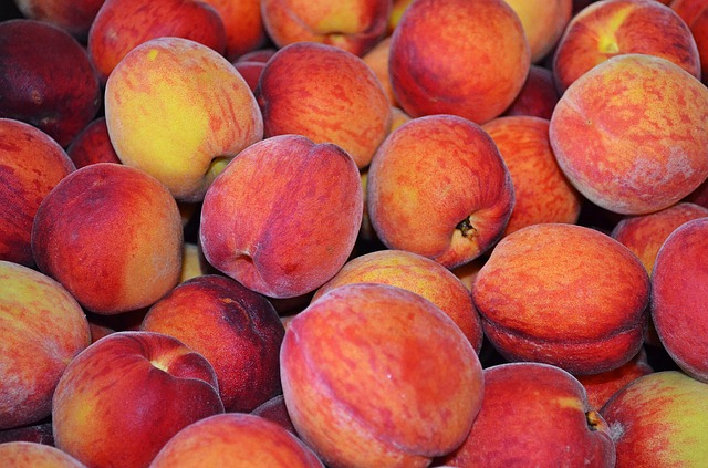 lots of peaches handpicked from a local farm