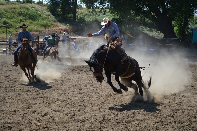 horse riders on horses at a rodeo